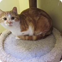 Adopt A Pet :: Sassoon - Rochester, MN