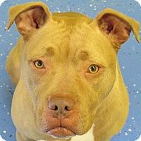 Adopt A Pet :: Honey - Newnan, GA