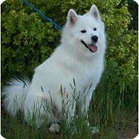 Adopt A Pet :: Eli - Arvada, CO