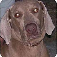 Adopt A Pet :: Diesel **ADOPTED** - Eustis, FL