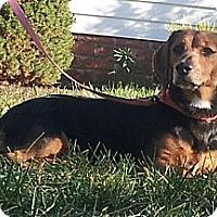 Adopt A Pet :: Lucy - West Bridgewater, MA