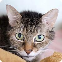 Adopt A Pet :: E.C. Bixby - Chicago, IL