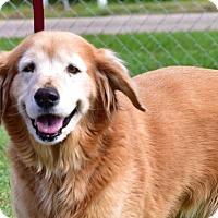 Adopt A Pet :: Anna - New Canaan, CT