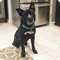 Adopt A Pet :: Dublin - Livonia, MI