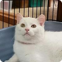 Adopt A Pet :: Lulu - Medina, OH