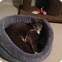 Adopt A Pet :: Avery - Oyster Bay, NY