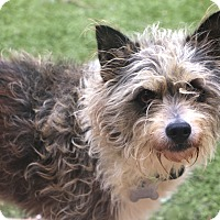 Terrier (Unknown Type, Small) Mix Dog for adoption in Bedminster, New Jersey - Sterling