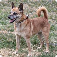 Adopt A Pet :: Wizard - Staunton, VA