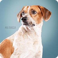 Adopt A Pet :: Gunther - Hagerstown, MD