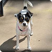 Adopt A Pet :: Hadley - Granbury, TX