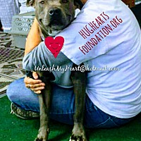 Adopt A Pet :: Soft Petal - Hermosa, CA