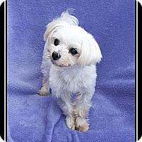 Adopt A Pet :: Hudson - Fort Braff, CA