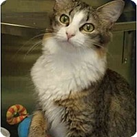 Adopt A Pet :: Heaven - Fort Lauderdale, FL