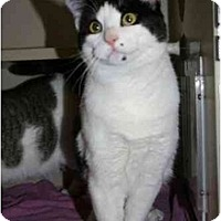 Adopt A Pet :: Marilyn: LOVEABLE YOUNG LADY! - Quincy, MA