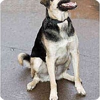 Adopt A Pet :: Joe - Portland, OR