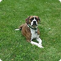 Adopt A Pet :: Brutus - Plainfield, IL