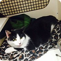 Adopt A Pet :: Rocky - Troy, OH