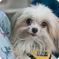 Adopt A Pet :: Wilbur - New York, NY