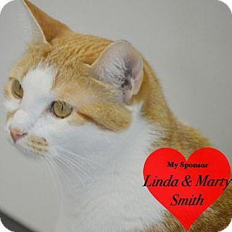 Domestic Shorthair Cat for adoption in San Leon, Texas - Taffy
