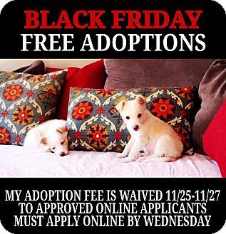 Sheltie, Shetland Sheepdog/Siberian Husky Mix Puppy for adoption in Cincinnati, Ohio - Kip