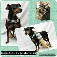 Adopt A Pet :: Orphan Annie - Ponca City, OK