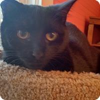 Adopt A Pet :: Val - Morganton, NC