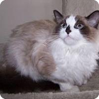 Adopt A Pet :: Andy - Colorado Springs, CO