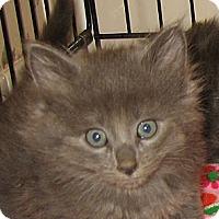 Adopt A Pet :: EMERALD aka Chilly - Hamilton, NJ