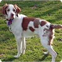 Adopt A Pet :: Gunnar - Buffalo, NY
