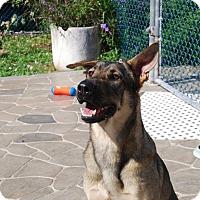 Adopt A Pet :: Logan - Pompano Beach, FL