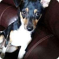Adopt A Pet :: Taffy - Marlton, NJ