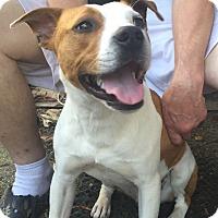 Adopt A Pet :: Jarvis - MILWAUKEE, WI
