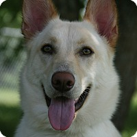 Adopt A Pet :: Amelia - Nashville, TN