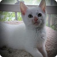 Adopt A Pet :: Riddley - Fairborn, OH