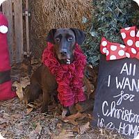 Adopt A Pet :: Leelah - Bishopville, SC