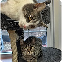 Adopt A Pet :: Lucy and Luna - Milford, MA