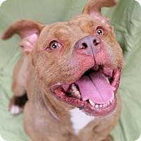 Adopt A Pet :: Bane - Brookhaven, NY
