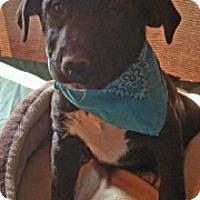 Adopt A Pet :: Diesel - Union Grove, WI