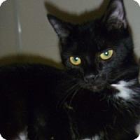Adopt A Pet :: Kimmy - Hamburg, NY