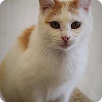 Adopt A Pet :: Sawyer -- 7 MONTHS - Hillside, IL