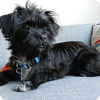 Adopt A Pet :: Noah - Houston, TX