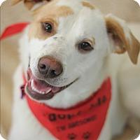 Adopt A Pet :: Bogart - Dalton, GA