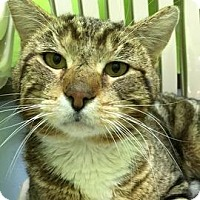 Adopt A Pet :: Tazmanian Angel - Janesville, WI