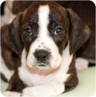 Hound terrier mix size | Popular breeds of dogs in the US photo blog