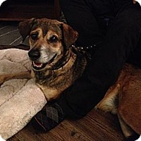 Adopt A Pet :: Sobe - Vancouver, BC