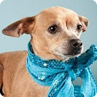 Adopt A Pet :: Honey - Sacramento, CA