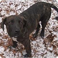 Adopt A Pet :: Puppy - Belleville, MI