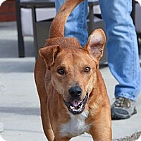 Adopt A Pet :: Riley - Hagerstown, MD