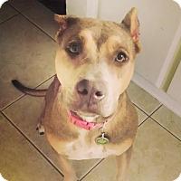 Adopt A Pet :: Manion - Scottsdale, AZ
