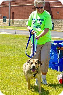 Mastiff Mix Dog for adoption in Middletown, Ohio - Bella